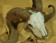Skulls - crani di tutte le specie. La biodiversità ridotta all'osso 2013