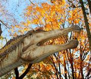 Dinosauri in carne e ossa La Sapienza 2015